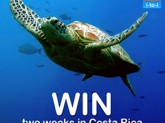 Win a Trip to Help Turtles in Costa Rica