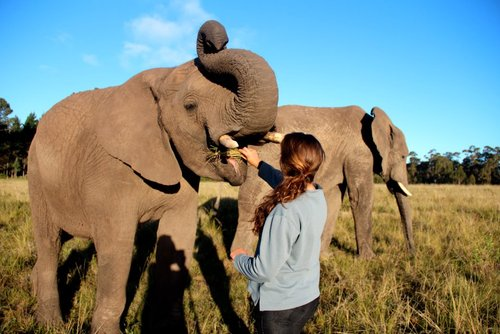 Gap Year Conservation: Volunteer with elephants in South Africa