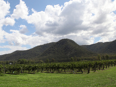 Best Wine Regions to Visit in New South Wales, Australia