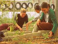 Permaculture Project in Palestine – from just US$35 per day!