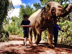 Elephant Village Project in Thailand - from just US$80 per day!
