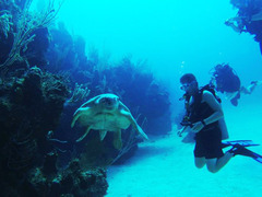 Bahamas: PADI + Marine Science + Community Program