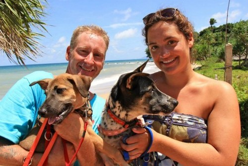 Volunteer with Cats and Dogs on Koh Lanta, Thailand