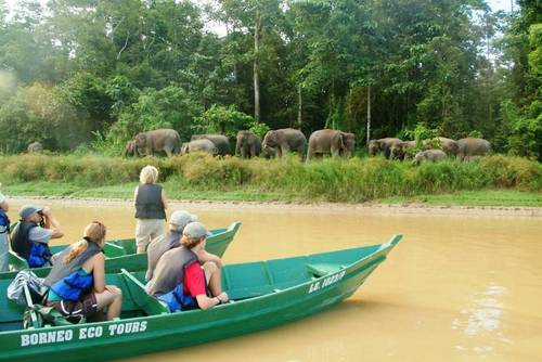 Asia Wildlife Tours