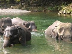 Indonesia Elephant Sanctuary