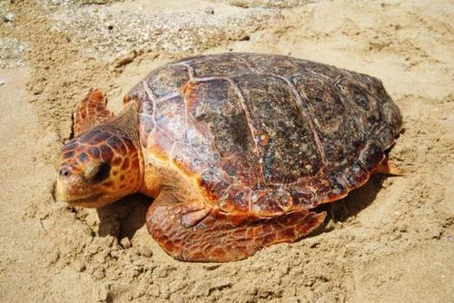 Cape Verde Turtle Conservation