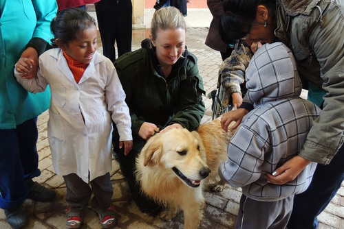 Canine Therapy in Bolivia or Argentina