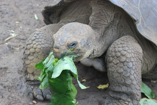 Galapagos Islands Conservation Project