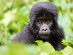Captivating Africa: Travel Through Uganda's Beautiful Biodiversity