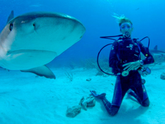 Shark Conservation Volunteer Project in Fiji