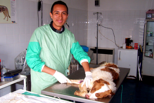Veterinary Medicine Work Experience Overseas