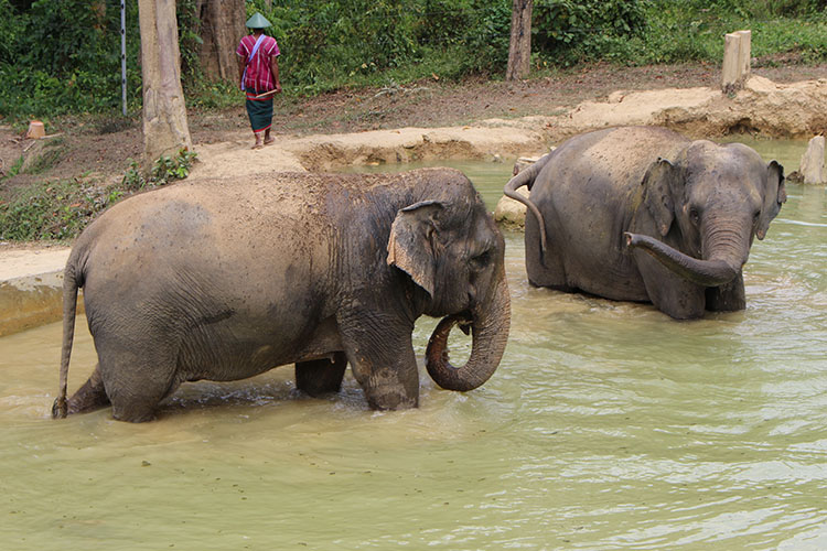 How to Ethically Interact with Elephants in Asia