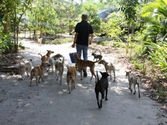 Volunteer at a Dog Shelter in Phuket, Thailand