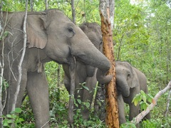 Volunteer at a Elephant Sanctuary in Northern Thailand