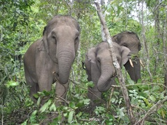 Elephant Sanctuary Visit, Northern Thailand
