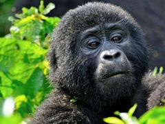 Best Wildlife Destinations in Uganda