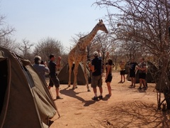 Field Guide Course South Africa (4 Weeks or 1 Year)