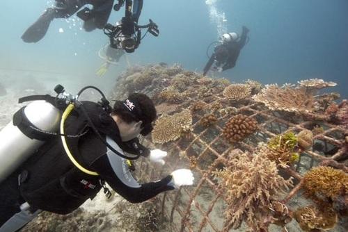 SSI Dive Control Specialist Courses, Gili Trawangan, Indonesia
