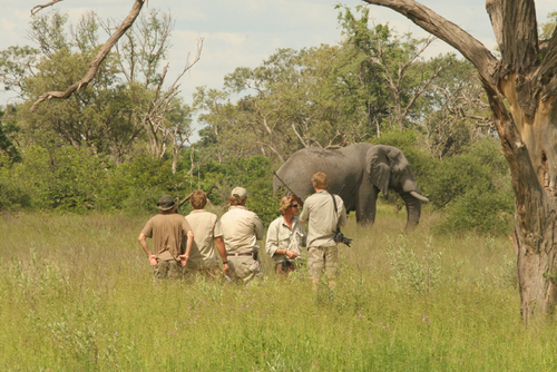 28 Day Field Guide course, Okavango Delta, Botswana