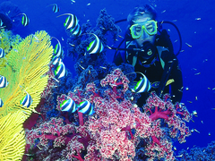 How to Stay Safe When Scuba Diving for the First Time