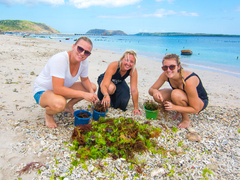 Marine conservation projects abroad