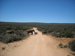 How to Plan a Road Trip in Southern Africa