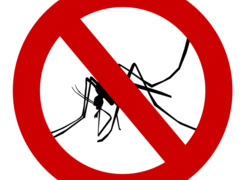 Top Tips How to Avoid Getting Malaria