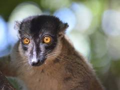 Madagascar Wildlife Conservation Project