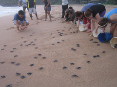 Challenges of Protecting Turtles in Costa Rica