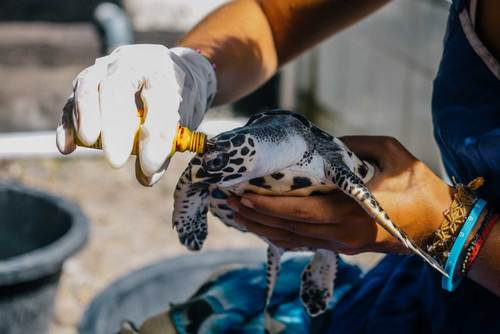 Turtle Conservation in Costa Rica from US$285
