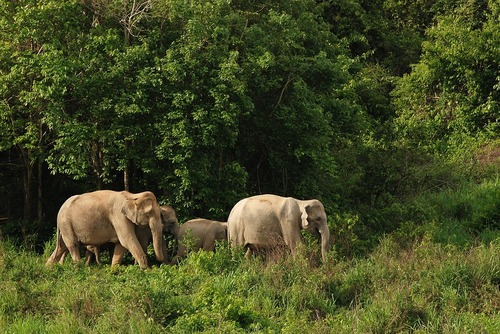 5 Things I Learned at an Elephant Sanctuary in Thailand