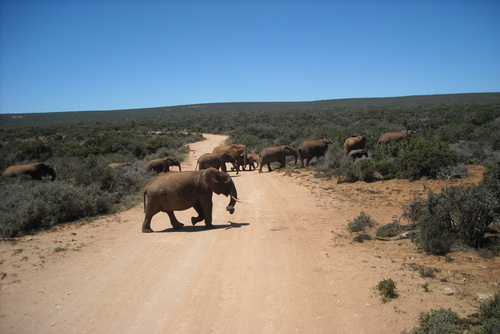 Facts About Elephants (& Why You Should Volunteer with Them)