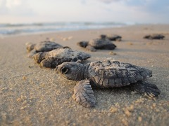 Best Places to See Baby Turtles Hatch