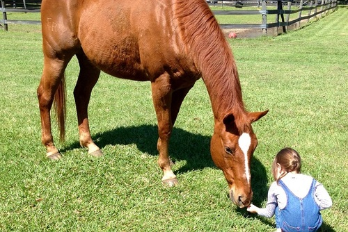 Children's Autism and Horse Therapy USA