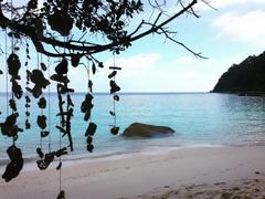 Turtle Conservation Project, Perhentian Islands, Malaysia