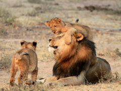 Big 5 Conservation In South Africa