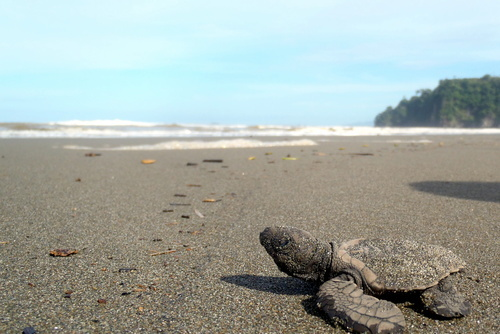 Costa Rica Turtle Conservation Experience