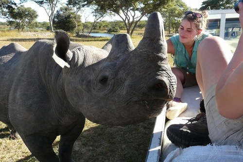 Rhino And Elephant Volunteering in Zimbabwe