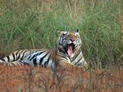 The Great Tiger Project