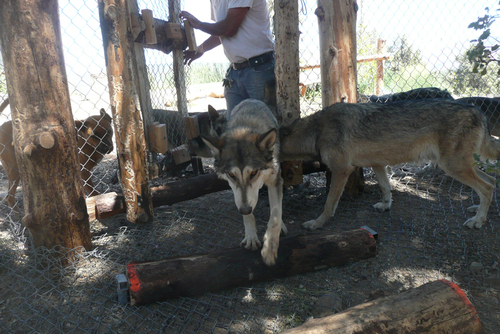 Wolf Care California