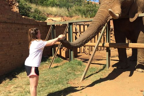 Wildlife Sanctuary Volunteer in South Africa