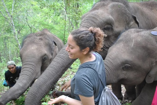 Elephant Research Internship, Northern Thailand
