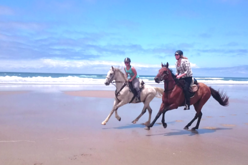 Horse Riding Gap Year Working Holiday