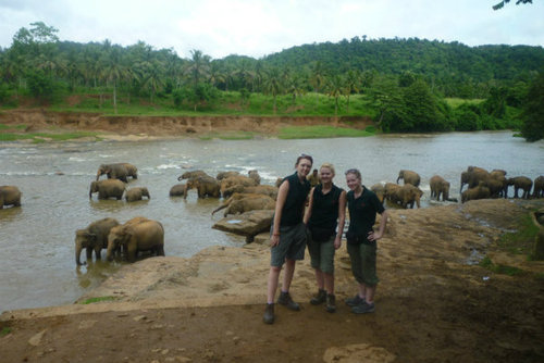 Volunteer at an Elephant Camp in Sri Lanka