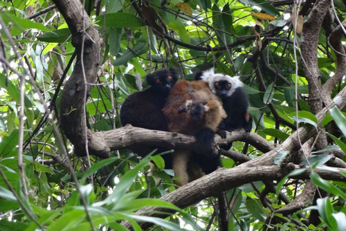 Madagascar Lemur Conservation Placements from £150