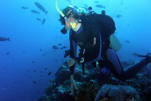 Madagascar Diving & Marine Conservation Placements from £250