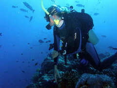 Fiji Diving & Marine Conservation Placements from £250