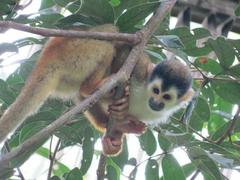 Costa Rica Wildlife Conservation Placements from only £150