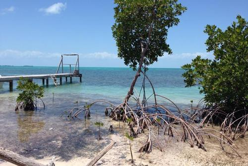 Belize Beach Conservation Course Credit Internship