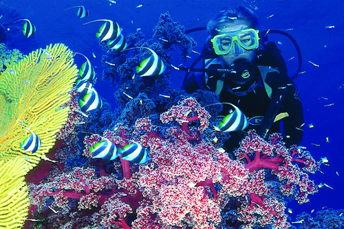 Learn to Dive (Great Barrier Reef) Australia